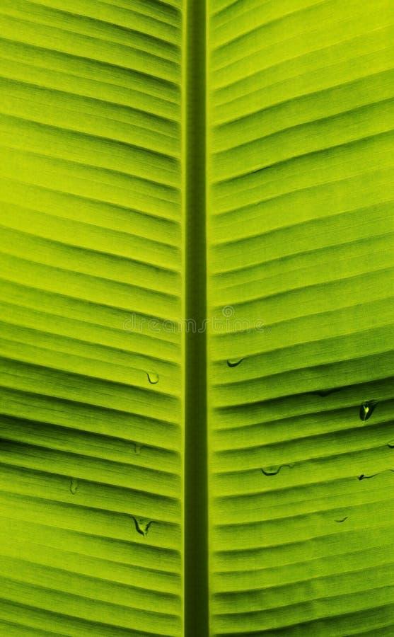 Banaanblad met patroon van aard stock fotografie