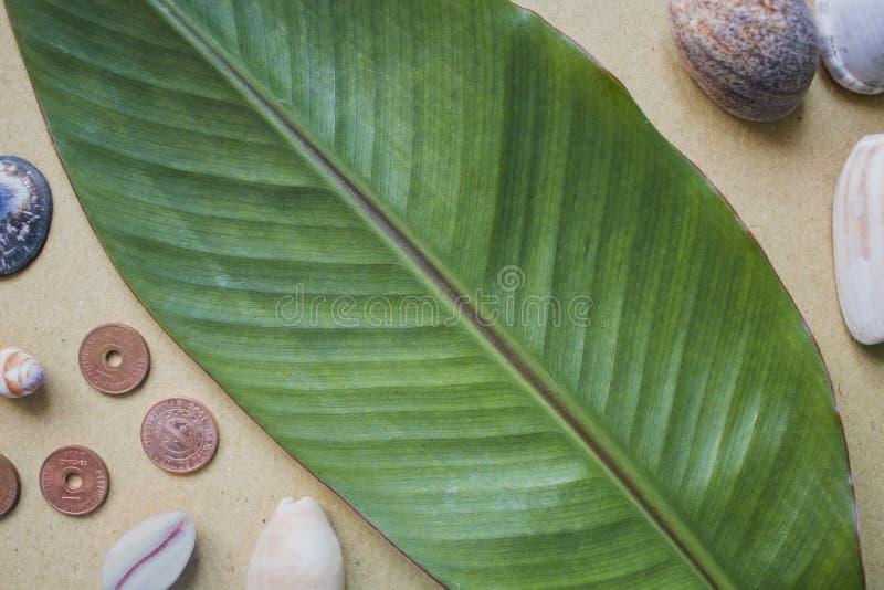 Banaanblad, shells en muntstukken op de lijst Vlakke fotoachtergrond op beige ambachtdocument stock foto