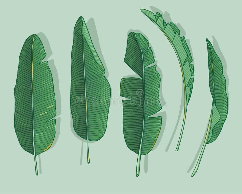 Banaanbladeren royalty-vrije illustratie