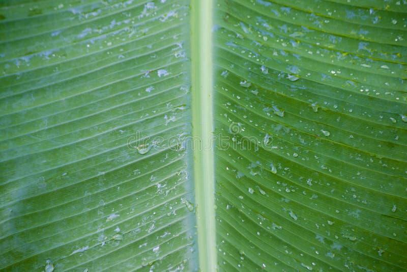 Banaanbladeren en dalingswater royalty-vrije stock fotografie