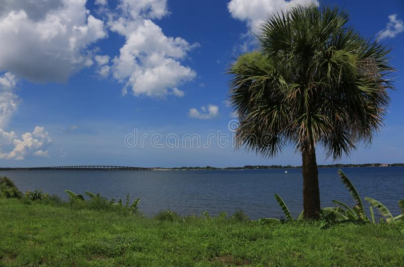 Banaanboom en palm aan rivierkant in Melbourne, FL royalty-vrije stock foto