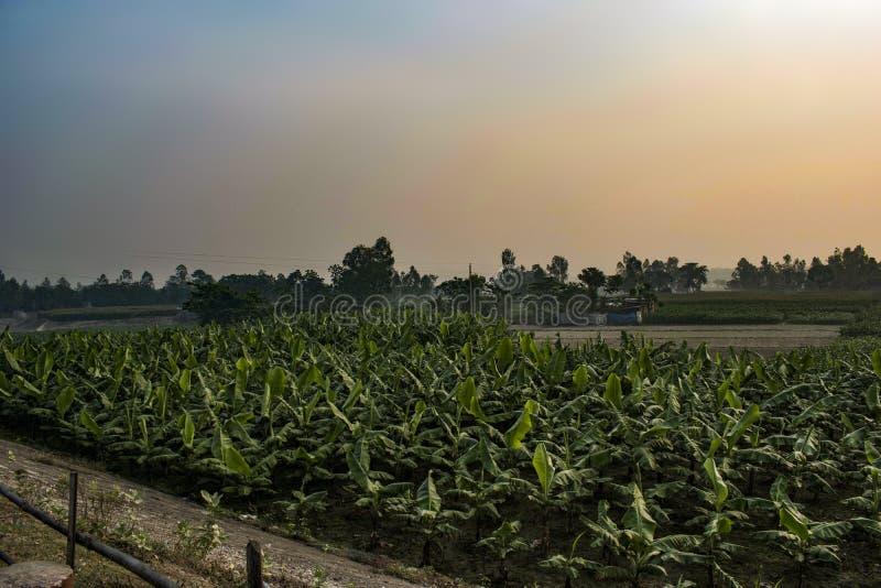 Banaangebied in Bangladesh royalty-vrije stock afbeelding