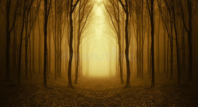 Banaho en konstig skog med dimma i höst royaltyfri bild