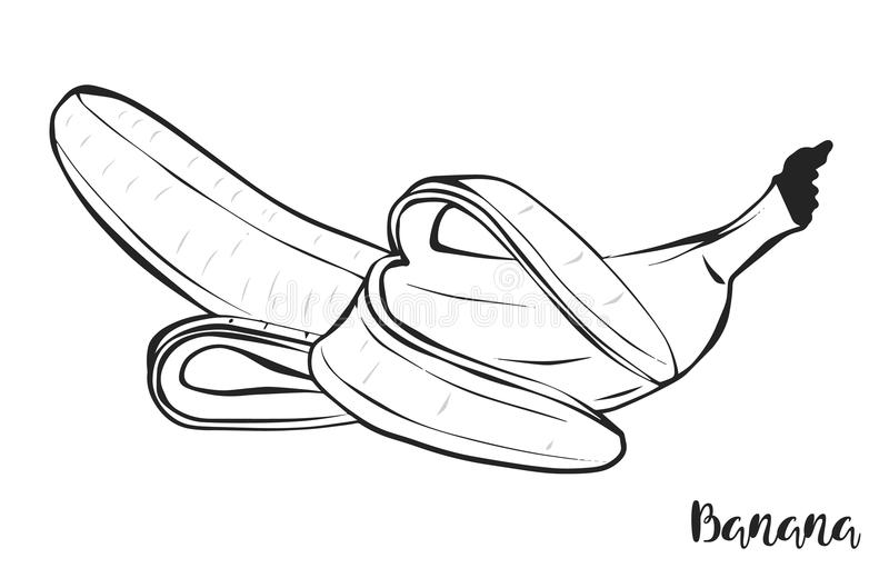 banan Frukt vektor vektor illustrationer