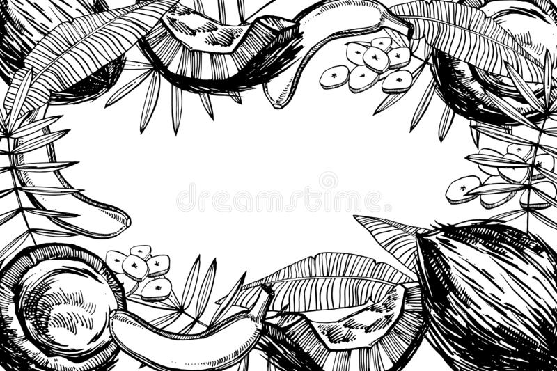 Banan i Kokosowe nakreślenie ilustracje Wektorowa ręka rysować ilustracje odizolowywać na białym tle ilustracja wektor