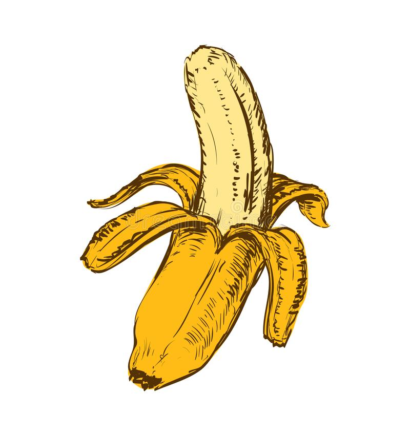 Banan isolerad hand dragen vektorillustration stock illustrationer
