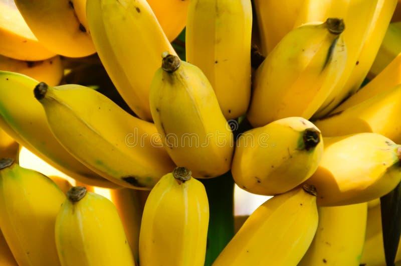Banan jest owocowy ale wierzy je lub nie, że jest nieprawdopodobny dostawać energię dużo, obraz royalty free