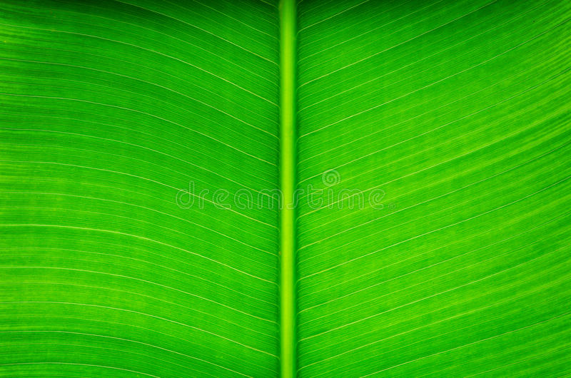 Download Banan leaf stock image. Image of closeup, leaf, abstract - 28819123