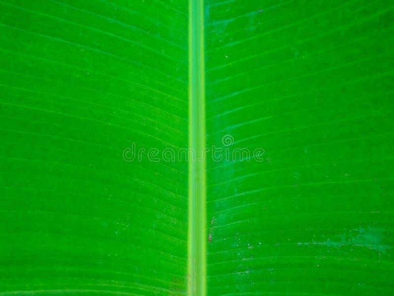 Banan leaf. Outdoor in the garden stock images