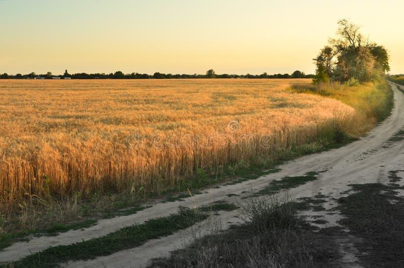 Banan mellan fälten under solnedgången royaltyfria foton
