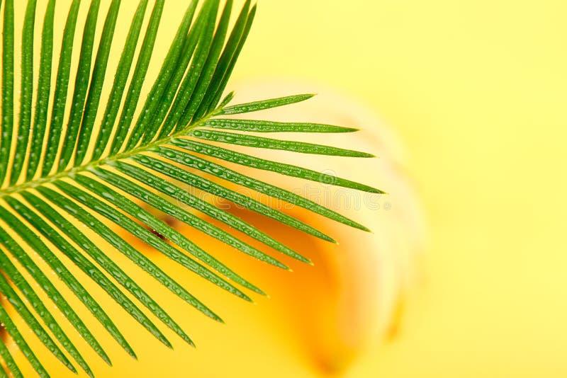 Banan z palmowym liściem fotografia stock