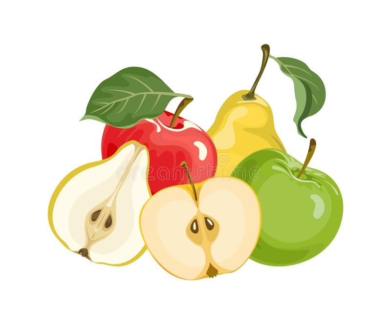Apples and pears isolated on white background. Fresh vector fruits. royalty free illustration