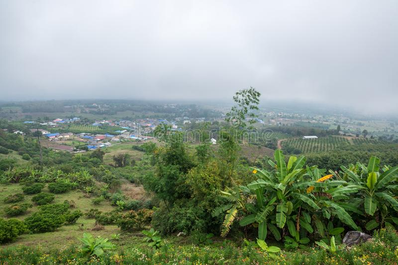 Banana agriculture on the village mountain in forest with mist and cloudy sky. Traveling in Thailand royalty free stock photography