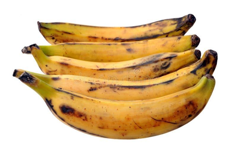 Banana banan fotografia royalty free
