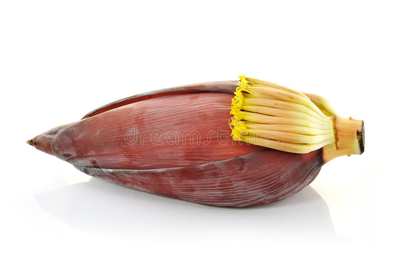 Download Banana blossom stock image. Image of green, cultivate - 26137053