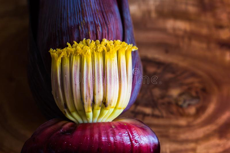 Banana blossom mocha, flowers of unripe banana in wooden background with copy space for text. Banana blossom mocha, flowers of unripe banana in wooden stock photos