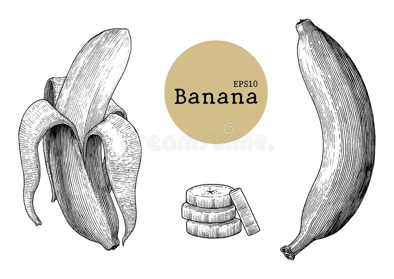 Banana collection sets hand drawing vintage engraving illustration stock illustration