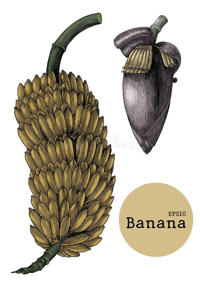 Banana collection sets hand drawing vintage engraving illustration vector illustration