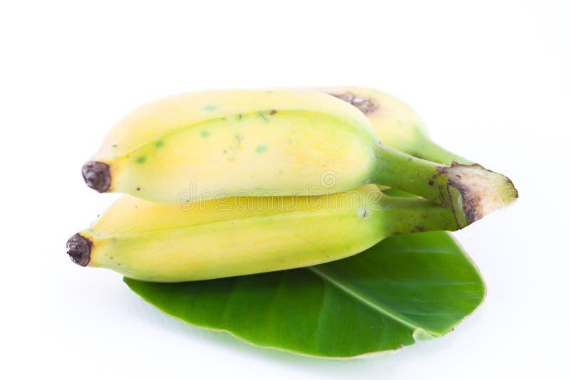 Banana coltivata fotografie stock libere da diritti