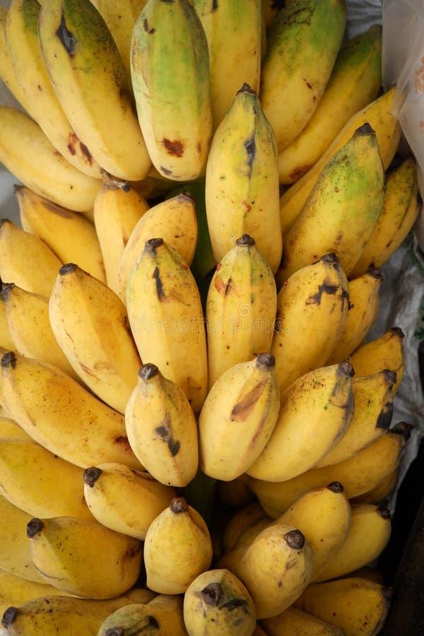 Banana coltivata immagine stock