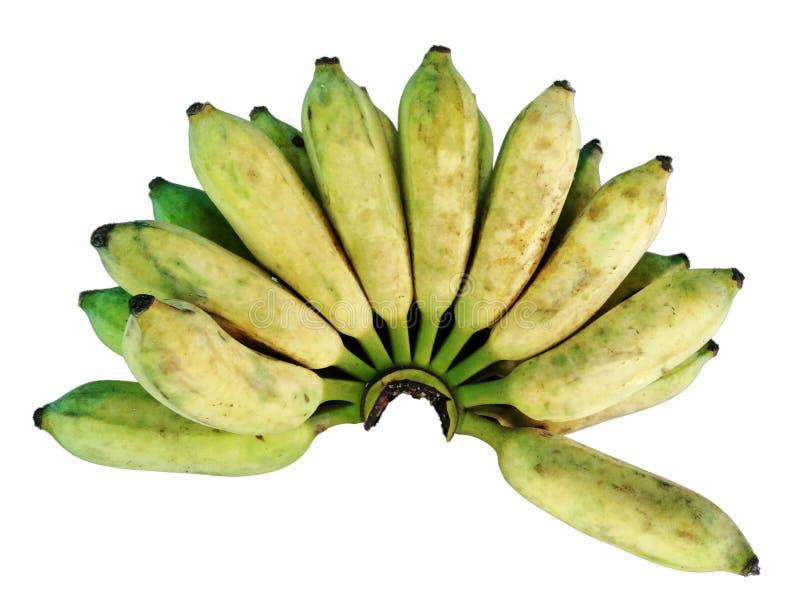 Banana coltivata cruda fotografia stock libera da diritti