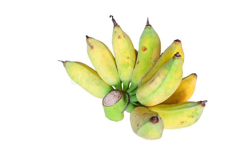 Banana coltivata in Tailandia fotografia stock