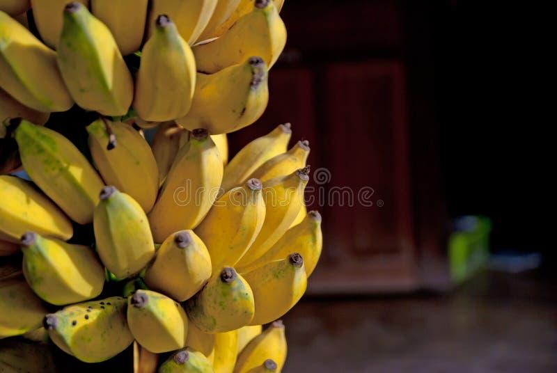 Banana coltivata in Tailandia immagine stock