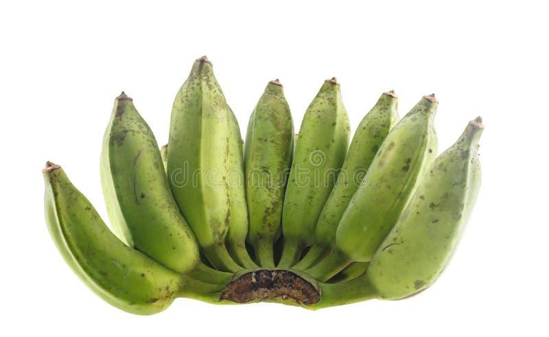 Banana coltivata verde isolata su bianco immagine stock