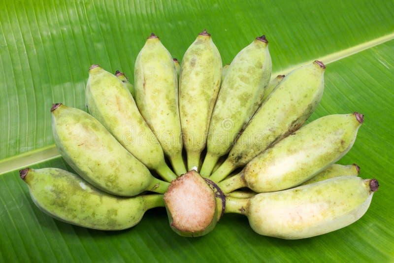 Banana cultivada no fundo da folha da banana foto de stock