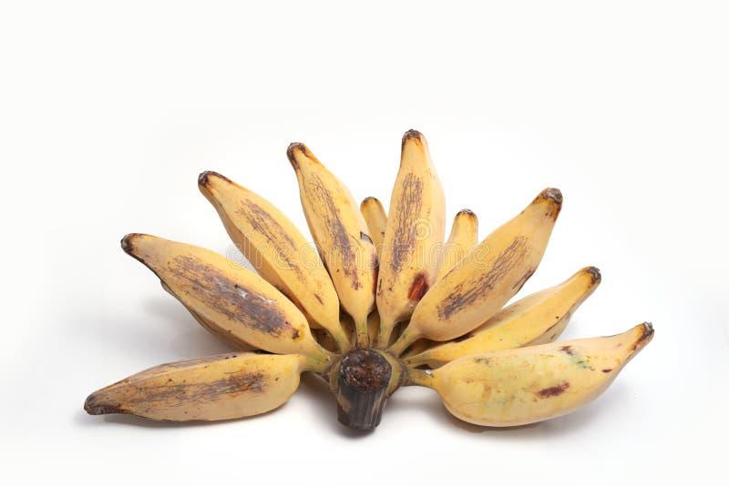 Banana d'argento di Bluggoe fotografia stock libera da diritti