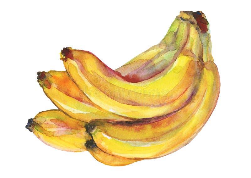 Banana da aquarela ilustração do vetor