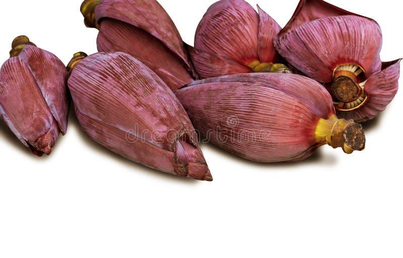 Banana da flor isolada no fundo branco com trajeto de grampeamento fotografia de stock royalty free