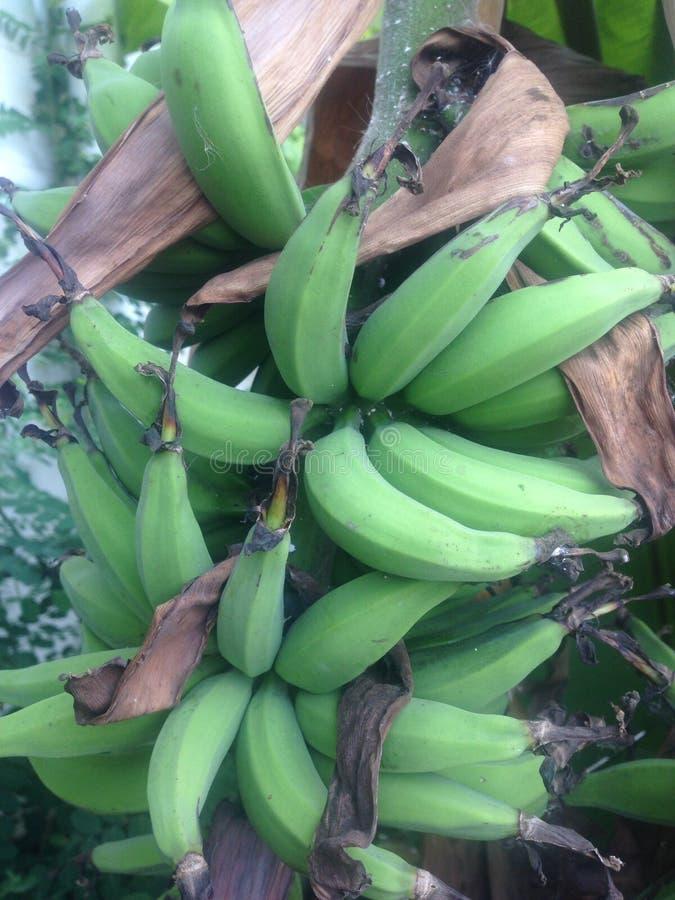 Banana di Lebmuernang fotografia stock