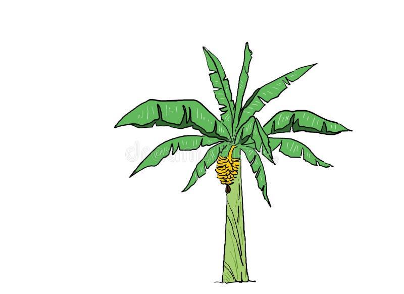 Banana em flor fresca e frutada e pronta a colher ilustração do vetor