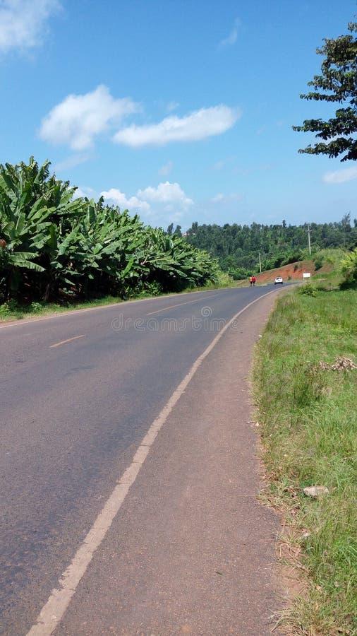 Banana farm by roadside stock image