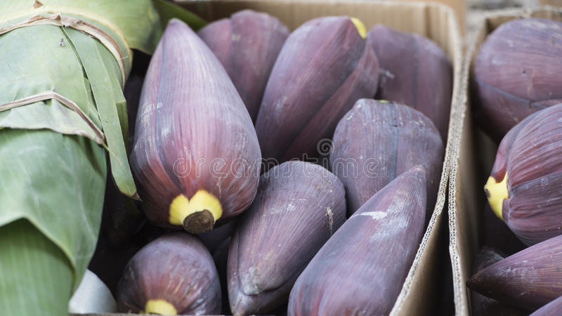 Banana flowers royalty free stock images