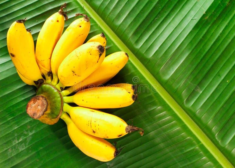 Banana stock images