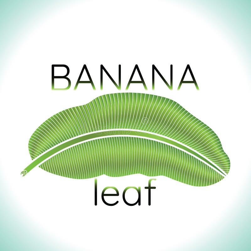 Banana green leaf logo. Banana green leaf tropical logo. vector illustration stock illustration