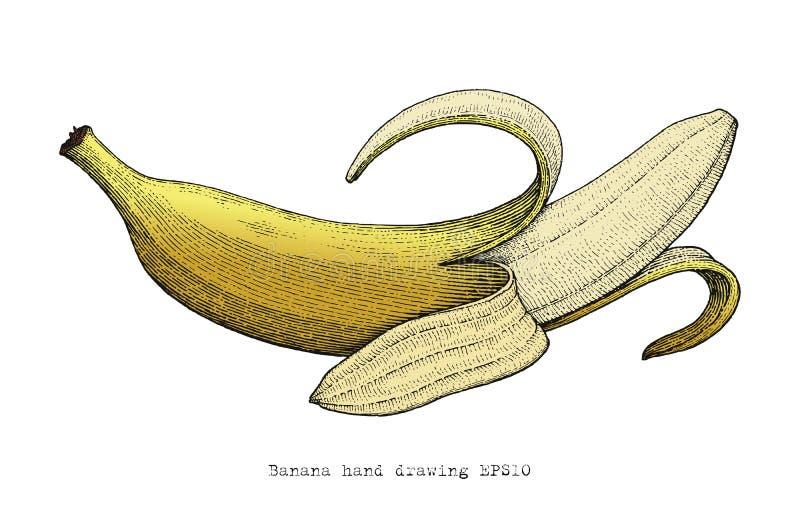 Banana hand drawing engraving style stock illustration