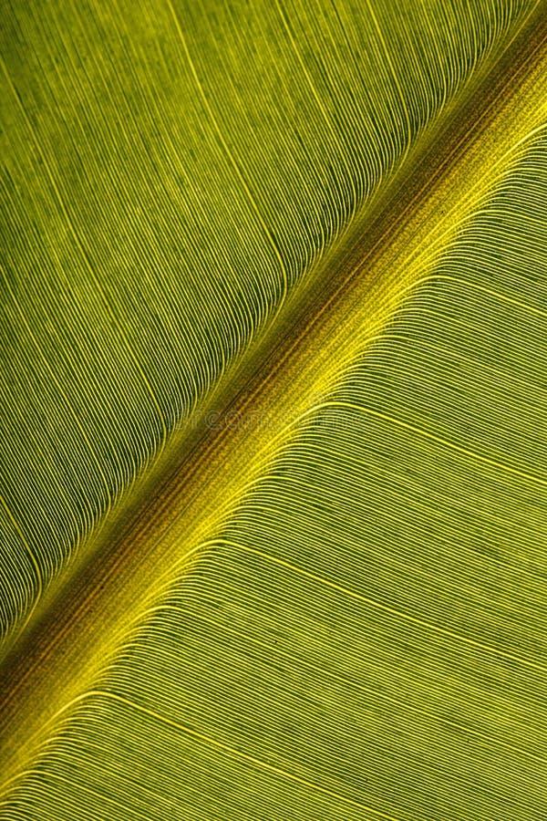 Free Banana Leaf Royalty Free Stock Image - 20633866