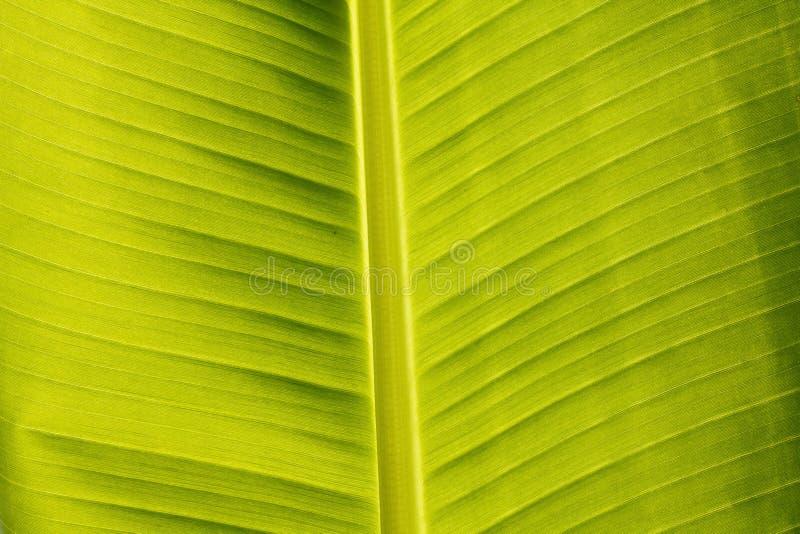 Download Banana Leaf Stock Images - Image: 24753524
