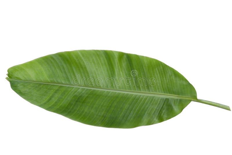 Banana leaf against blue sky royalty free stock photography