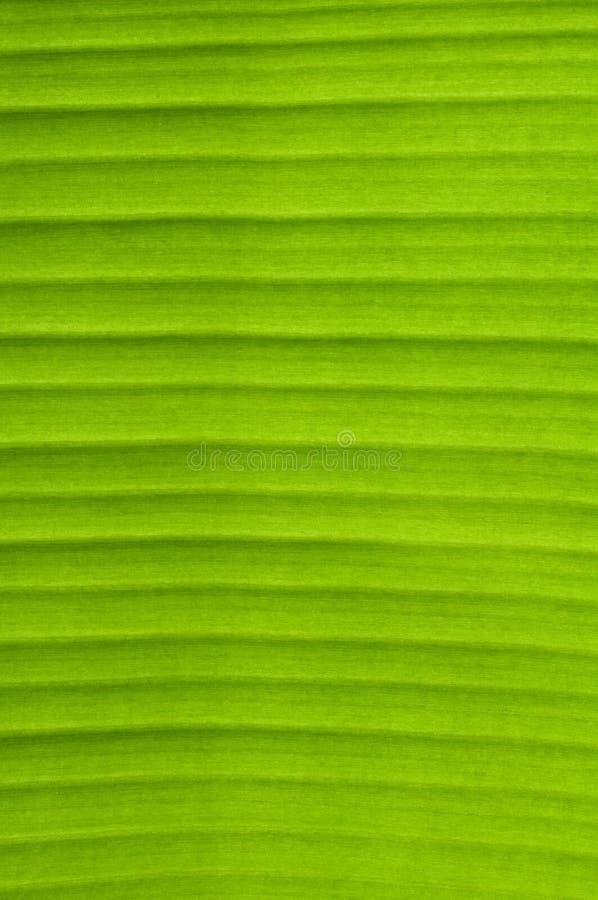 Banana Leaf Background Royalty Free Stock Photo