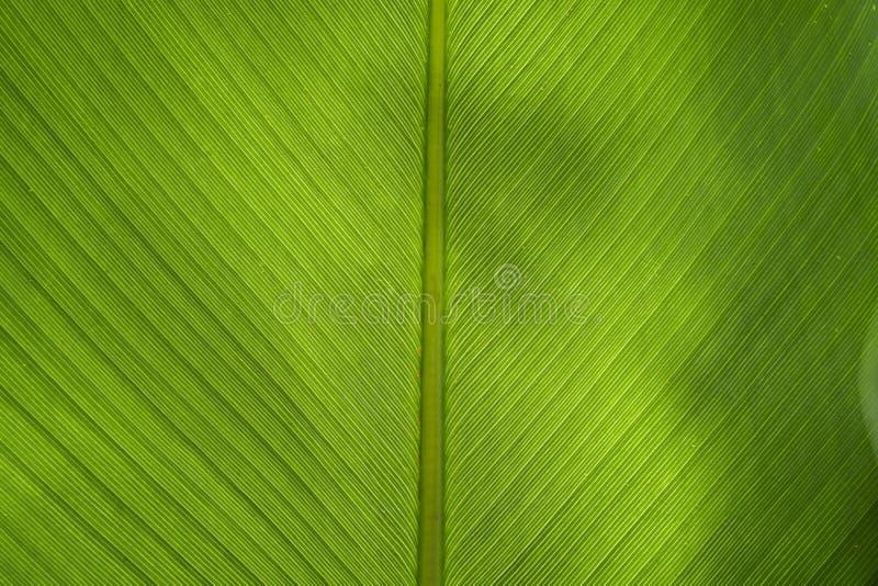 Banana leaf backlit sun - background stock images
