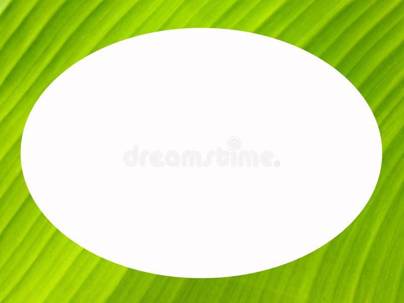 Download Banana Leaf Frame Stock Photo Image Of Beautiful Flora