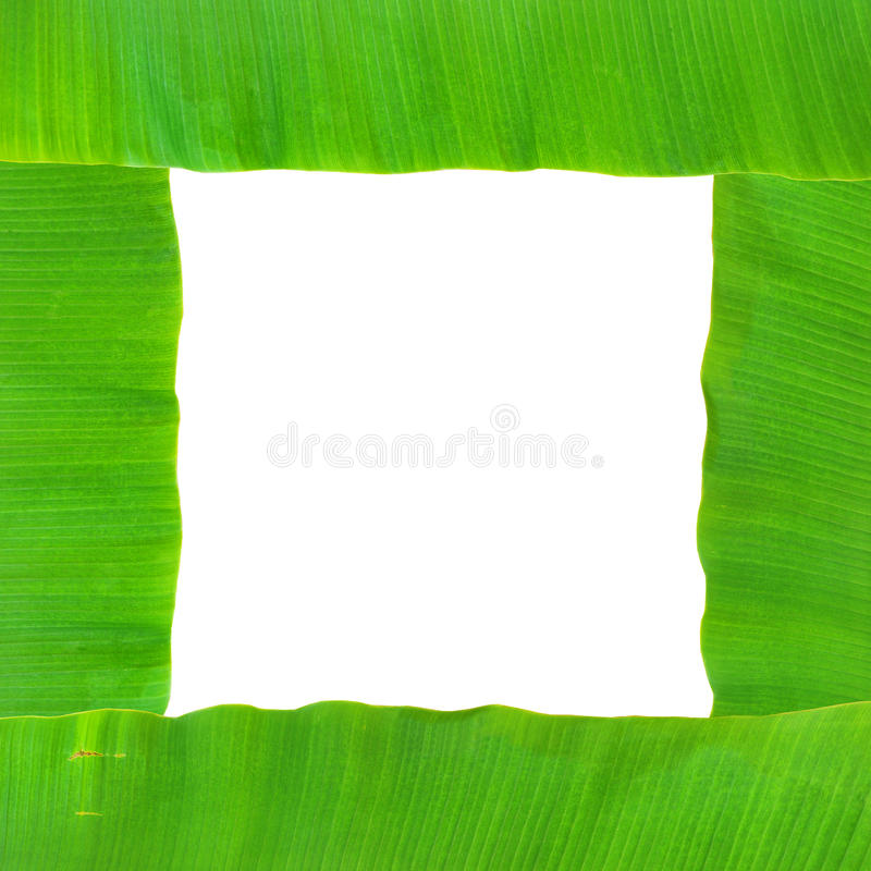 Download Banana leaf stock photo. Image of summer, isolate, banana - 38829198
