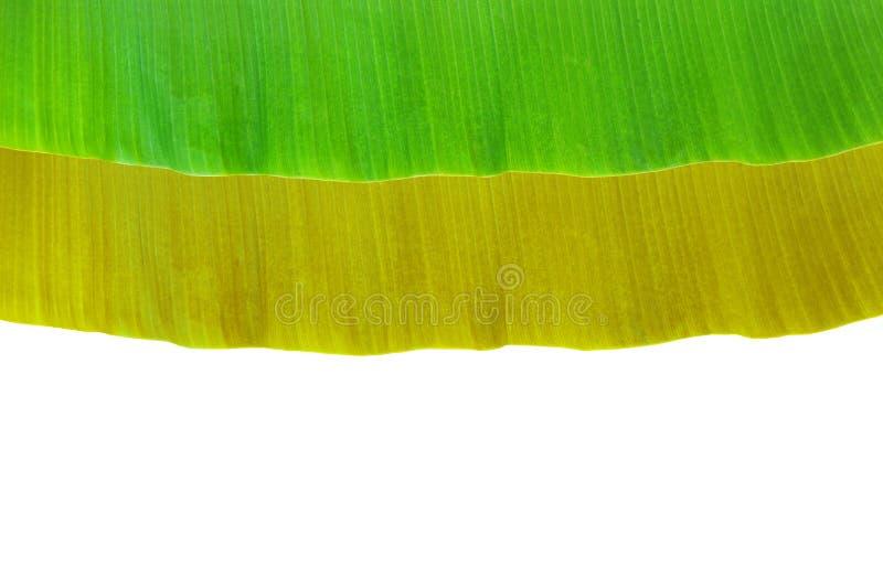 Download Banana Leaf Stock Photo - Image: 38829268