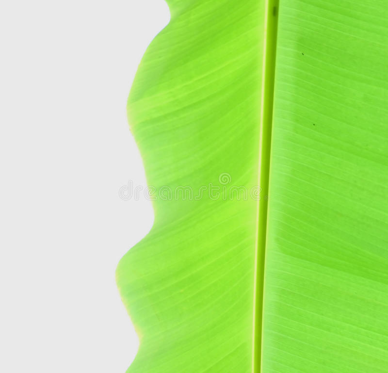 Banana leaf. On white background royalty free stock photos