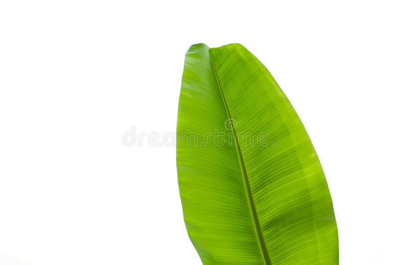 Banana leave isolated over white background stock photos