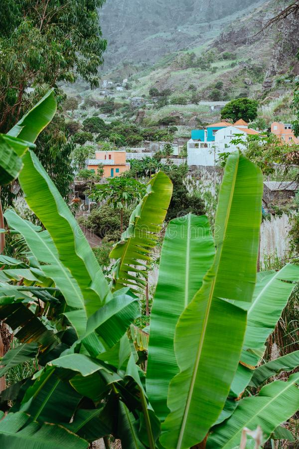 Banana leaves and typical dwellings in the Paul Valley. Many cultivated plants growing on the route down the valley. Santo Antao Island, Cape Verde stock photos